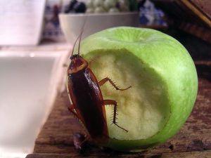 cockroachcc